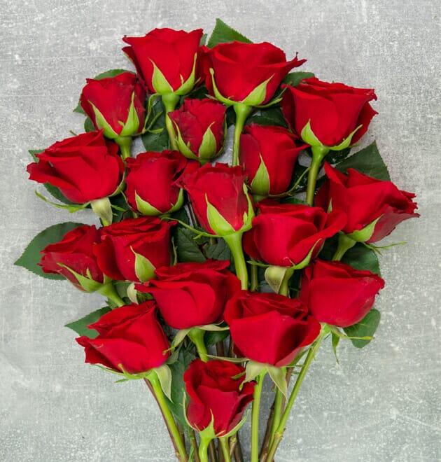 20-50 rote Rosen