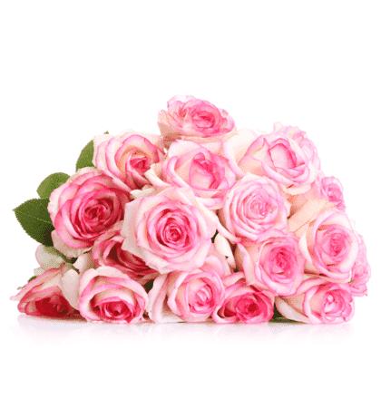 20 pinke Rosen