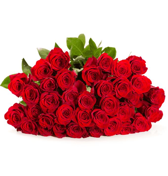 40 Rote Rosen Online Bestellen Blumeidealde