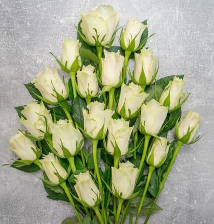 20 weiße Rosen