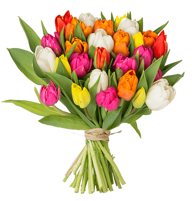 33 bunte Tulpen
