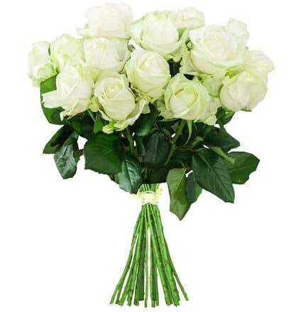 """Weiße Rosen """"White Avalanche"""""""